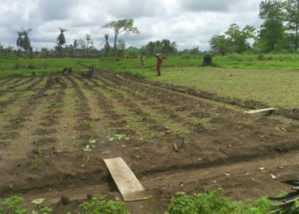 Vegetables and Fruit Trees on RHCI's land